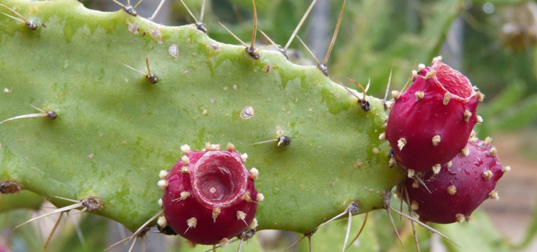 Cactus SIcile roadtrip