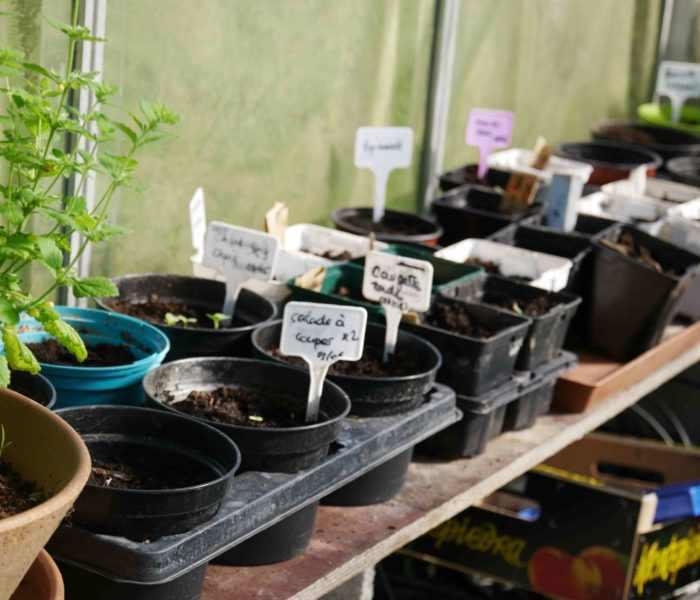 potager permaculture semis