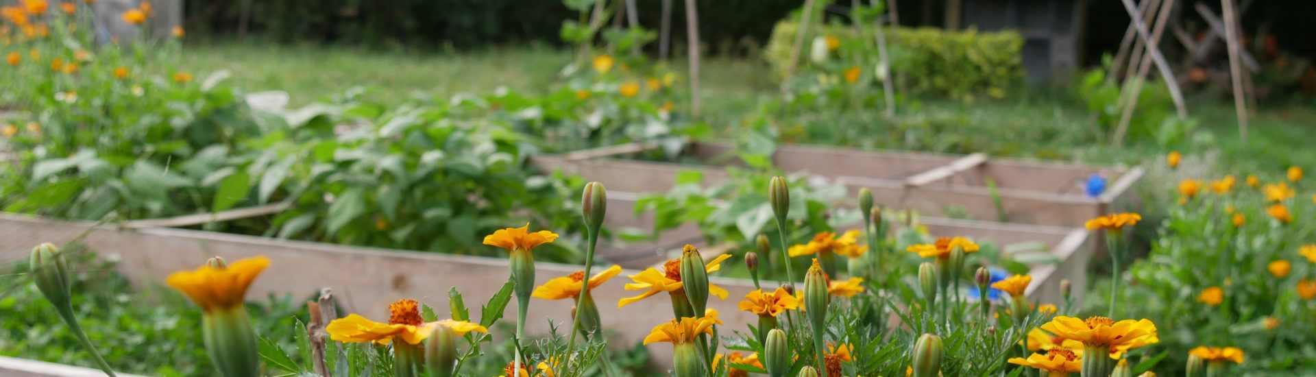 jardin permaculture premier pas bio