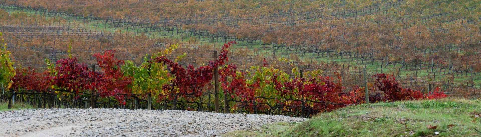une semaine road trip toscane italie vignes chianti automne